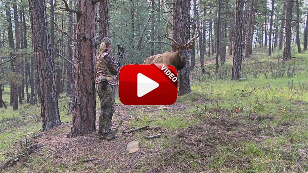 Esta arquera logra que un gran ciervo se acerque a cuatro pasos de ella