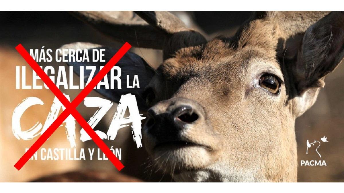 Varapalo judicial a Ecologistas en Acción: el Supremo anula la sentencia del TSJ que paralizó la caza en CyL