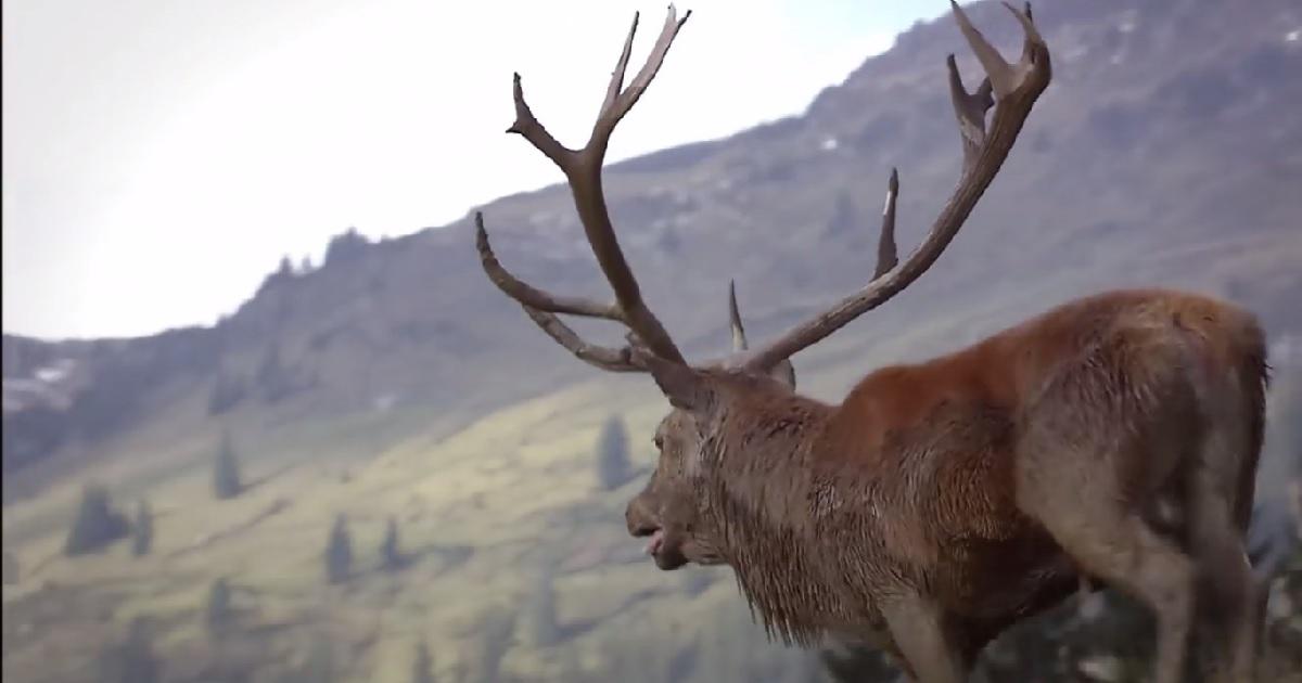 Siete spots publicitarios de caza que te pondrán el vello de punta