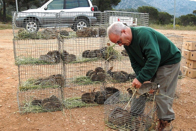 construye tu propio criadero de conejos