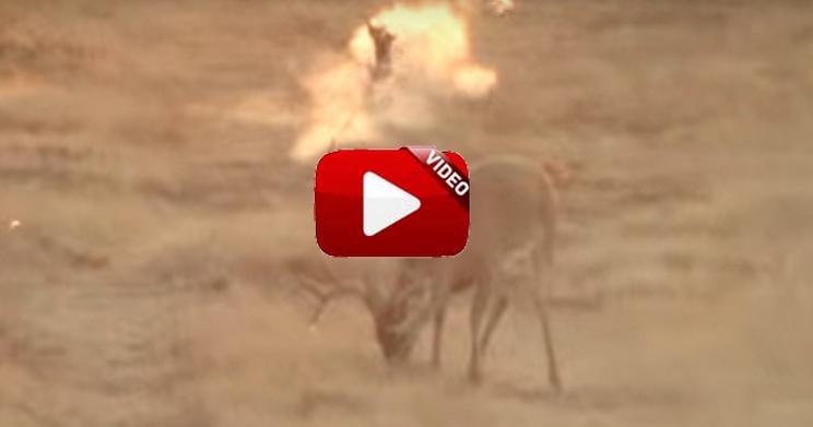 Falla un ciervo y caza un conejo con el mismo disparo