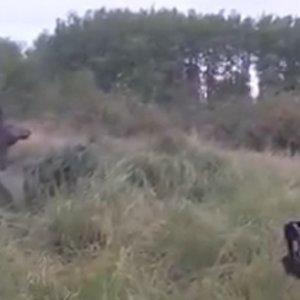Un cazador se topa con un ciervo atrapado en el barro