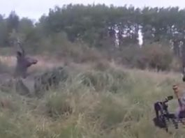 arquero ciervo barro