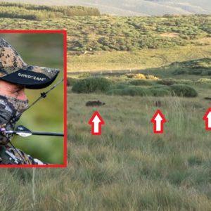 Varios jabalíes se cuelan entre el ganado y un cazador protagoniza este increíble lance
