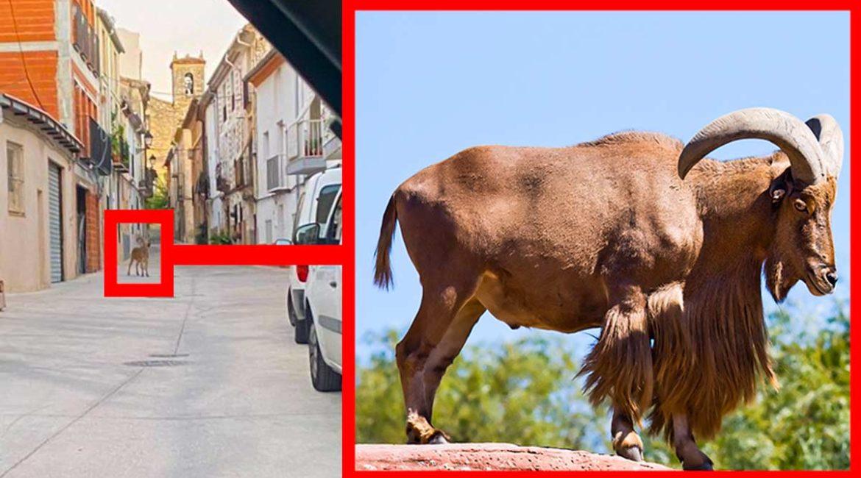 Graban a un arruí en mitad de un pueblo de Alicante