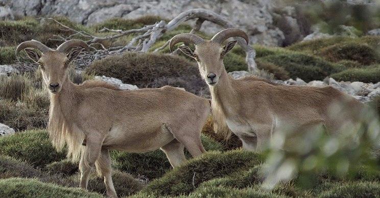 La Junta de Andalucía podría publicar una orden de vedas distinta a la consensuada con los cazadores