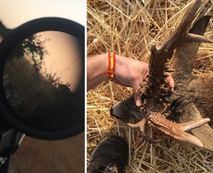 Caza un gran corzo con 23 centímetros de rosetas en la Alcarria Alta