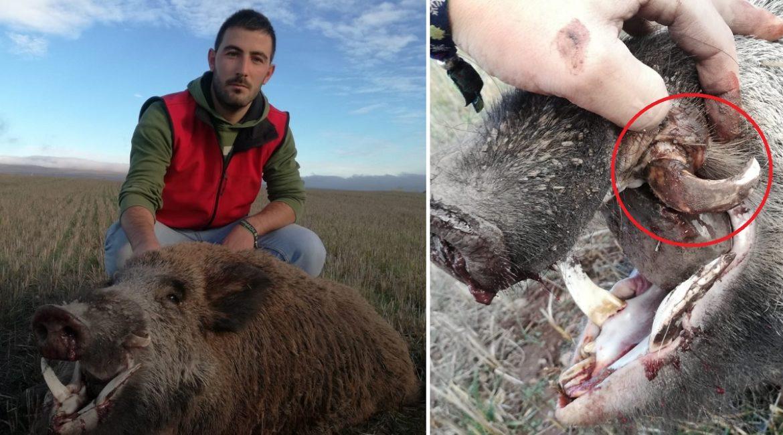 Va de perdices y acaba cazando uno de los jabalíes más raros de España