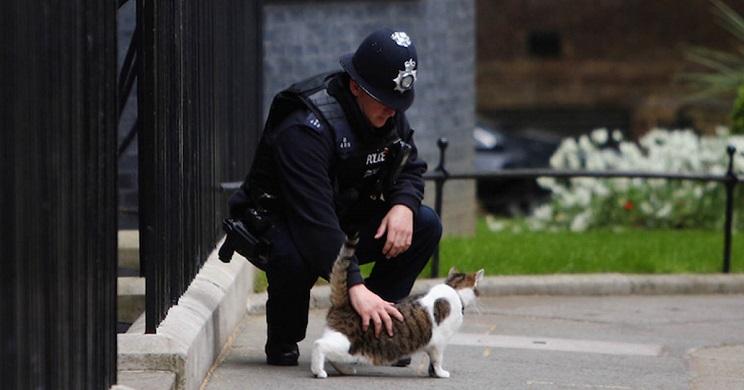 La policía británica da con el 'Asesino de Gatos' pero no es quien esperaban