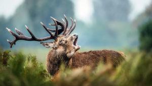 ¿Cómo ven los ciervos? Trucos para que no te detecten cuando vas a cazarlos