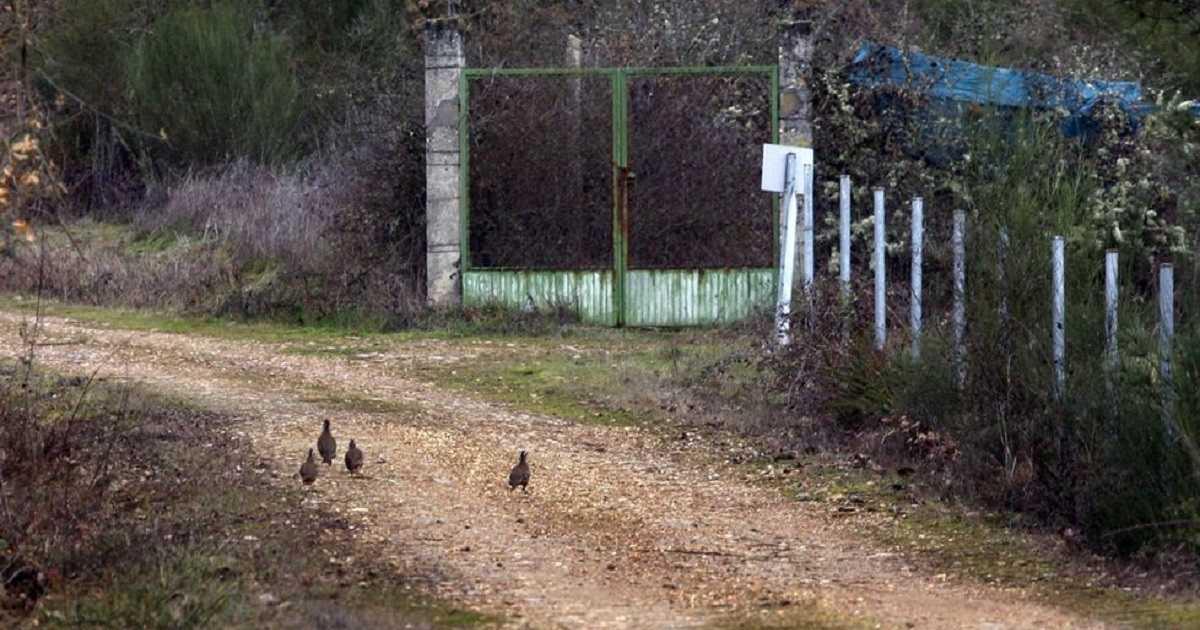 Presuntos ecoterroristas liberan 380 perdices en un coto de Galicia