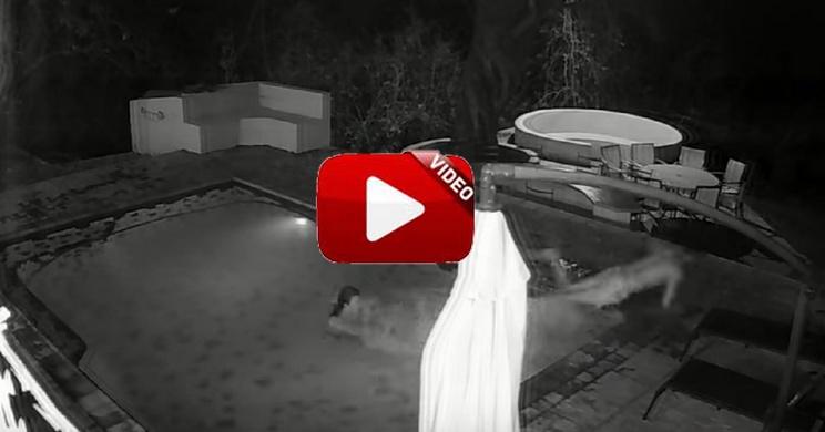 Un cámara de seguridad graba el ataque de un cocodrilo a una pareja en una piscina