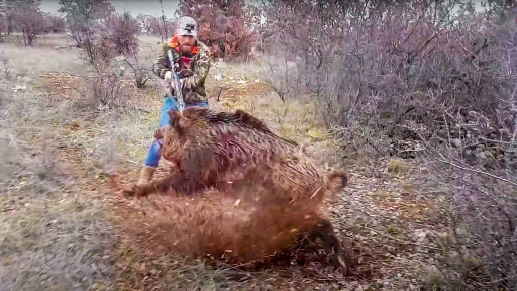 cazador apuntando a un jabali que lo esta atacando