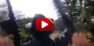 ataque-elefante-carga-safari