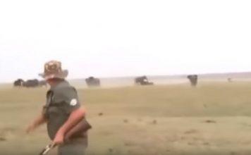 ataque elefantes