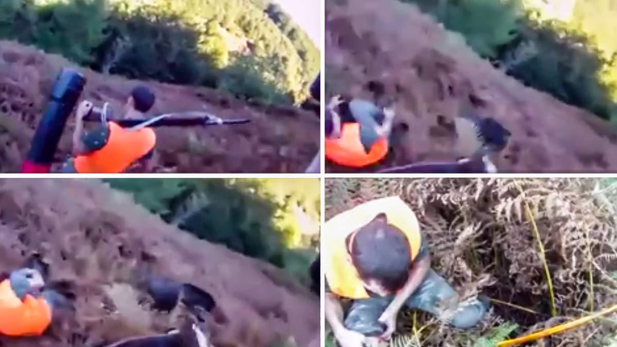 Un jabalí sale de la nada y raja a un cazador mientras su compañero abre fuego