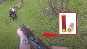 Un jabalí carga contra un cazador que solo tiene una escopetilla del .410 para detenerlo