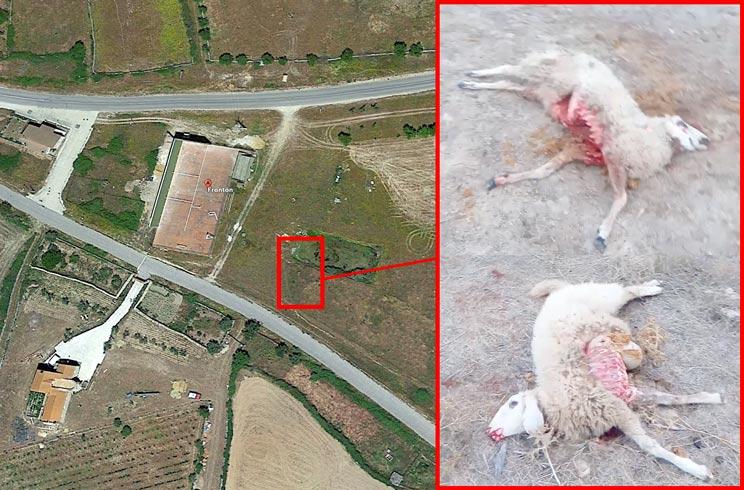 Un pueblo de Salamanca sufre un ataque de lobos a 100 metros de sus casas