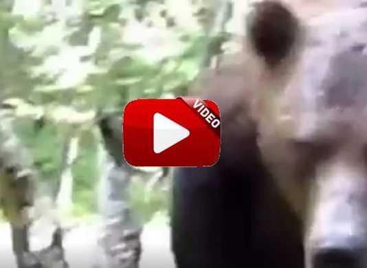 ataque oso a cazador.