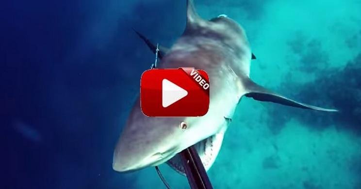 Sobrevive al ataque de un tiburón en el último segundo