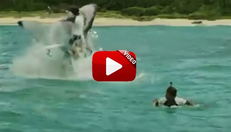 ¿Imaginas sufrir un ataque de tiburón como este?