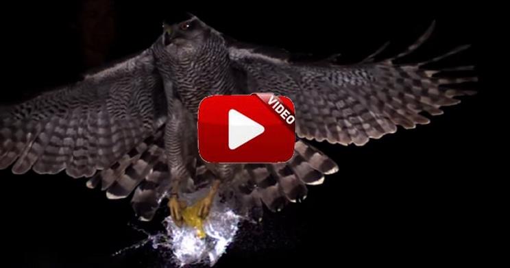 Graban impactantes ataques de animales a cámara superlenta