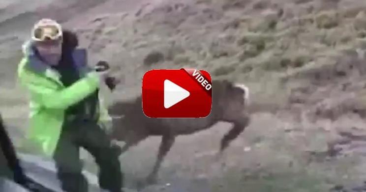 Recopilación de ataques de ciervos a cazadores