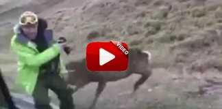 ataques-ciervos-a-cazadores