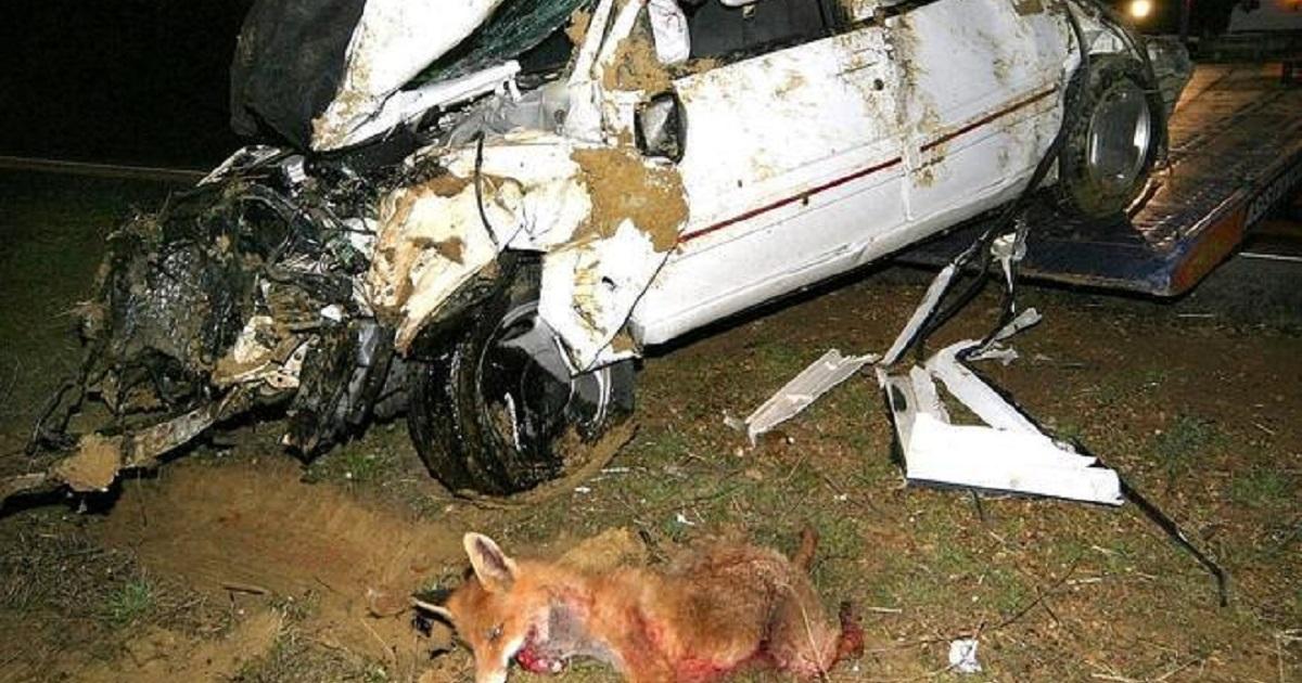 15 aterradoras imágenes de accidentes de tráfico con animales