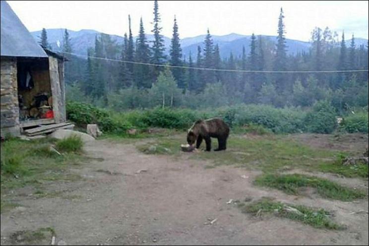 atrapados por un oso