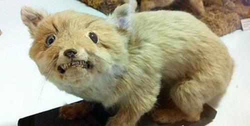 awful-bad-taxidermy-animals-31