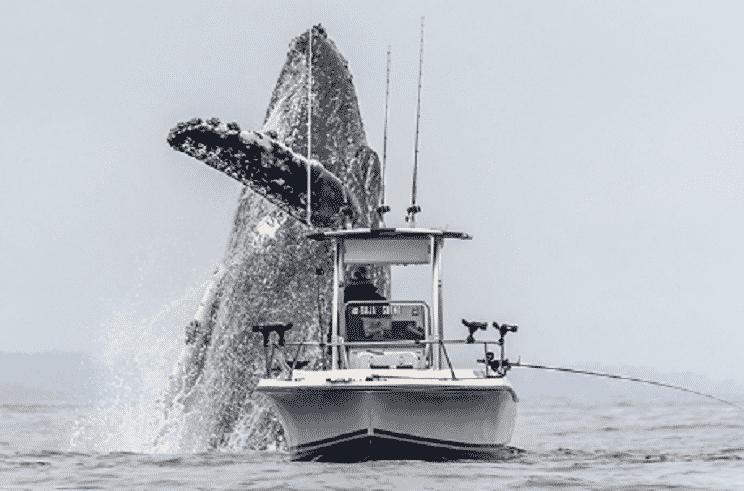 El impactante salto de una ballena junto al barco de un pescador se hace viral