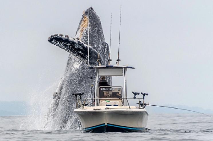 pescador ballena