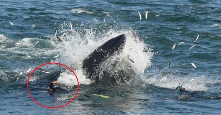Una ballena se traga a un buzo y lo expulsa vivo en una playa