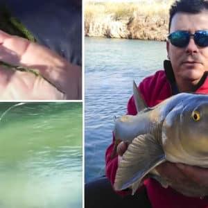Pescando barbos con ova: así se captura este preciado ciprínido a 'veleta corrida'