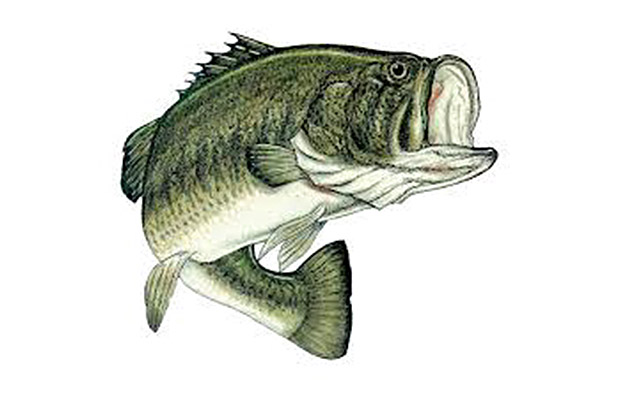 Especies pescables: El Black-Bass