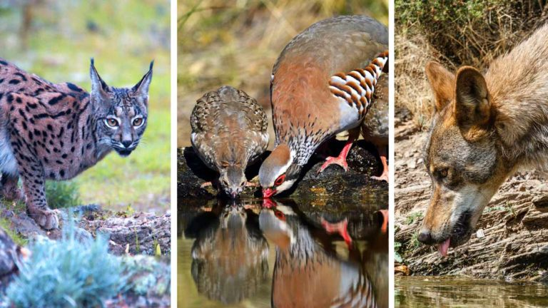Los bebederos inLos bebederos instalados por los cazadores benefician a todas las especies. /@Shutterstockstalados por los cazadores benefician a todas las especies. /@Shutterstock