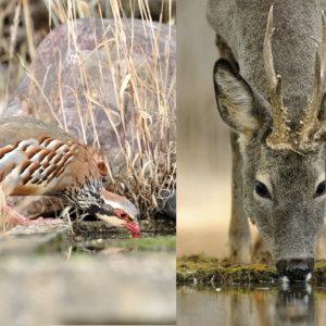 Bebederos para cotos de caza mayor y menor ¿Cómo y dónde los instalo?