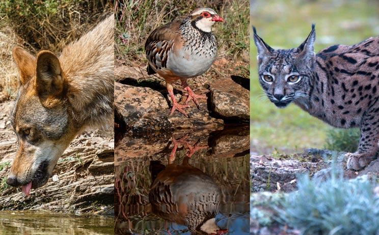 Multitud de especies acuden a beber a los puntos de agua que habilitan los cazadores en sus cotos. / Shutterstock