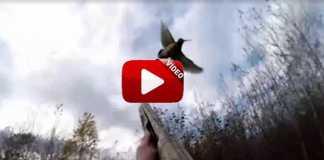 becada-excremento-cabeza-cazador