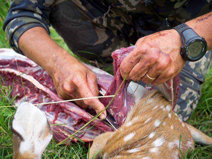 carne de ciervo carne de caza