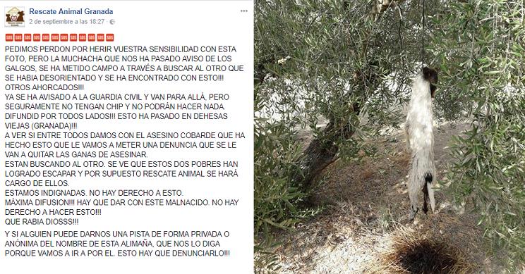 Publicaciones en Facebook de Rescate Animal Granada / Fotografía: capturas Facebook