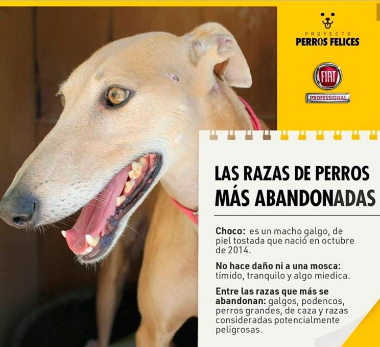 Boicot de los cazadores a FIAT por mentir sobre el abandono de los perros de caza