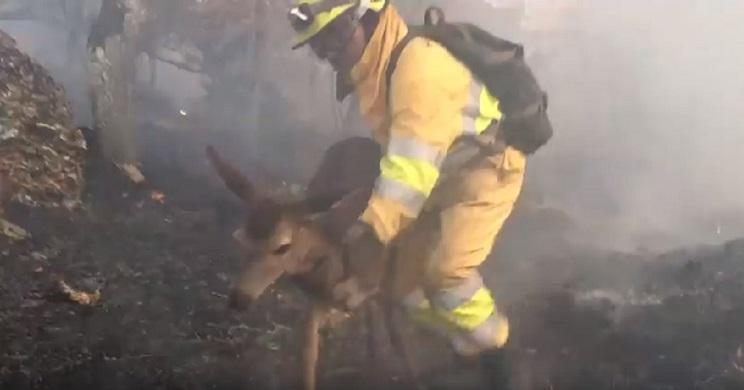 bombero forestal salva cierva incendio 2