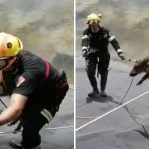 Bomberos de Alicante rescatan a un jabalí en una balsa de riego abandonada
