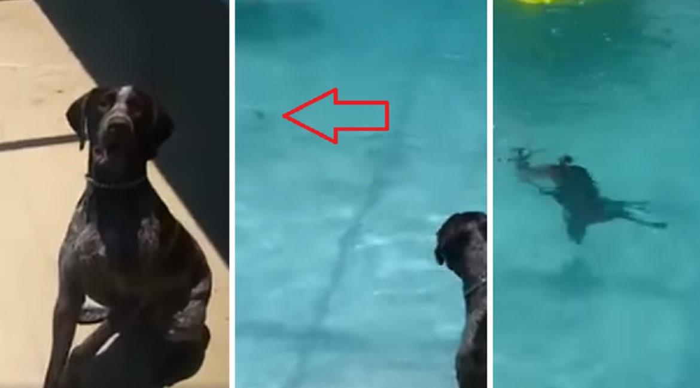 Este perro de caza protagoniza un increíble cobro ¡buceando!