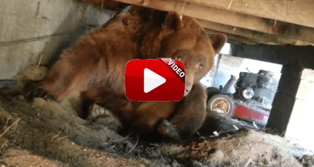 Encuentran un oso bajo el porche de su casa