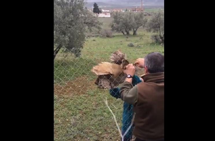 Cazadores salvan a un búho real enganchado en una valla metálica