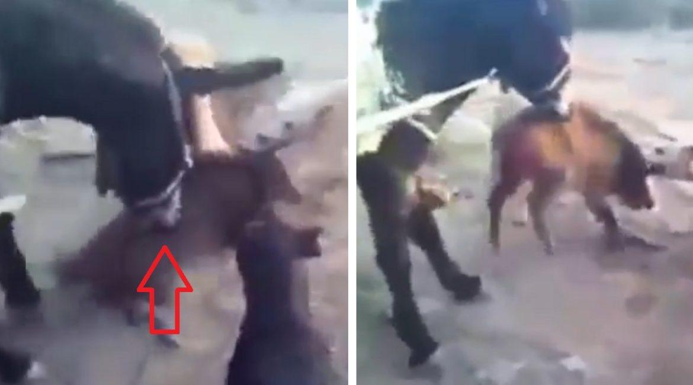 Un jabalí se despeña y cae al vacío: el vídeo que ya han visto 120.000 personas