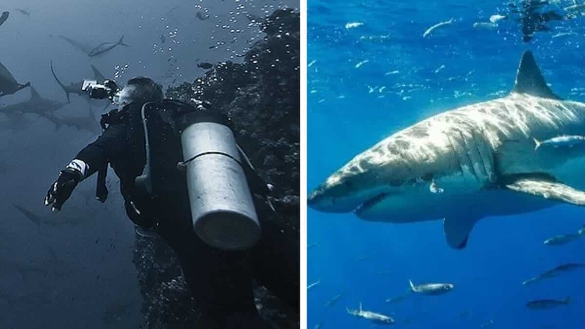 Un equipo de buzos se topa con un muro de cientos de tiburones